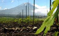富士山ワイナリー