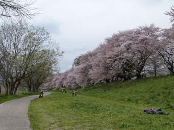 淀川河川公園 背割堤地区